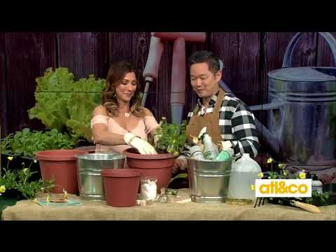 Gardening hacks with Danny Seo of NBC's 'Naturally, Danny Seo'