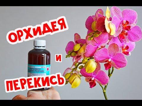 Перекись водорода для орхидей и растений # рецепт и полив орхидей перекисью
