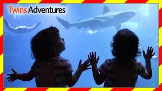 AQUARIUM FOR CHILDREN | OCEAN FISH FOR KIDS