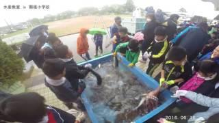 水産教室 in 関根小学校