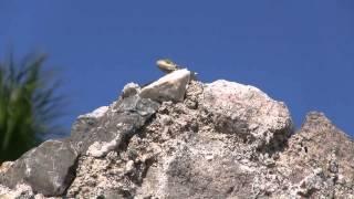 Греция.Остров Кос.(октябрь 2012)(Путешествие и отдых на острове Кос., 2012-11-04T17:59:50.000Z)