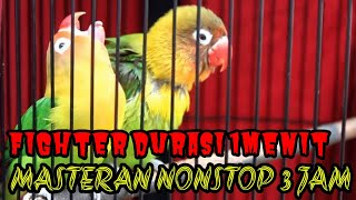 Download lagu NONSTOP MASTERAN LOVEBIRD 3 JAM || MASTERAN LB NONSTOP
