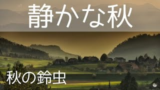 【癒しの自然音】鈴虫の鳴き声1時間(小雨)!癒し 作業用BGM