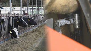 우유 짜는 로봇 착유기 국산화 성공…노동력 대폭 절감 …