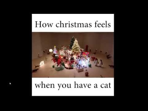 cats on Christmas - YouTube