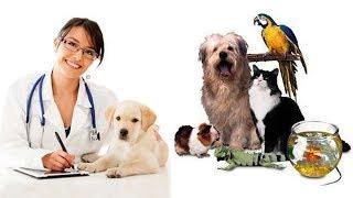 Ветеринарный уход за животными (рассказывает Константин Перепечаев)