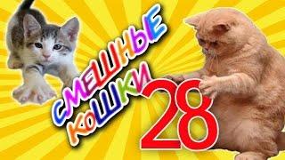 Смешные кошки 28 ● Приколы с животными 2015 - Коты ● Funny cats vine compilation - Part 28