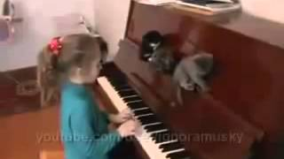 Chorus of Kittens Хор Котят