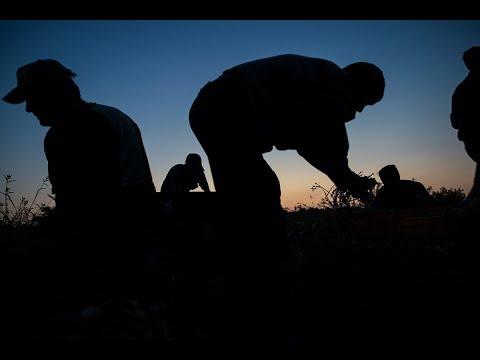 Gaza Farmers Struggle Between Economic Squeeze and Israeli Sniper Fire