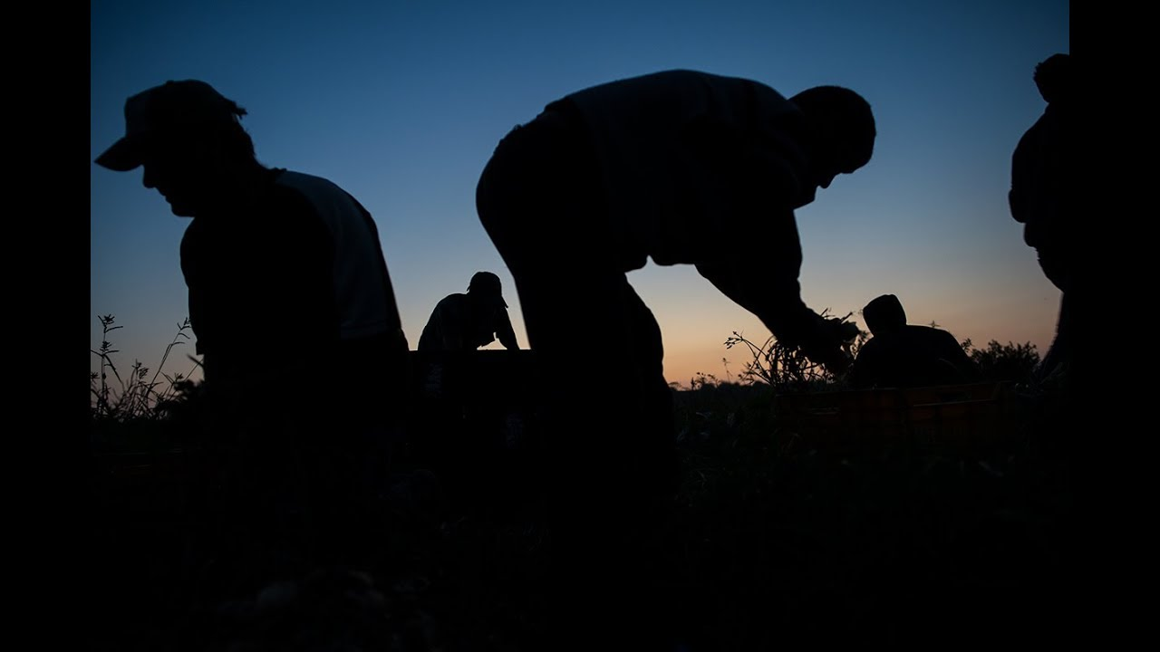 Gaza Farmers Struggle Between Economic Squeeze and Israeli Sniper Fire