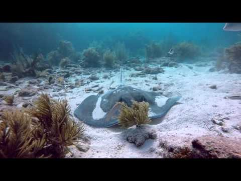 Sharks, Rays, Turtles, Crabs -Molasses Reef Oct 3, 2015