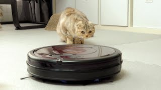 고양이와 로봇청소기 Cats VS Robotic Vac…