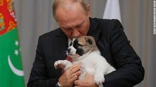 プーチン氏に子犬、トルクメニスタン大統領が誕生祝いに贈る Source:htt...
