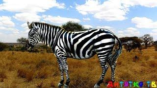 Дикие животные для самых маленьких Учим диких животных Развивающие мультики для детей Учим слова