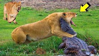 Он Был Обречен! Битвы Животных Снятые на Камеру