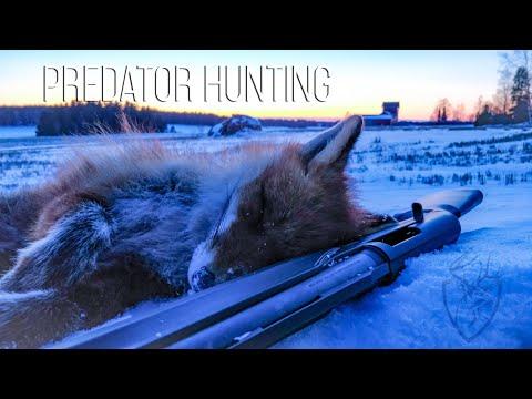 NH: Kettujahtia Ajokoirilla | Fox Hunting With Hounds | 2019