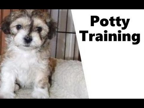 how to potty train a puppy in an upstairs apartment