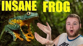 WORLD'S MOST AMAZING FROGS!!   The Fringed leaf frogs!