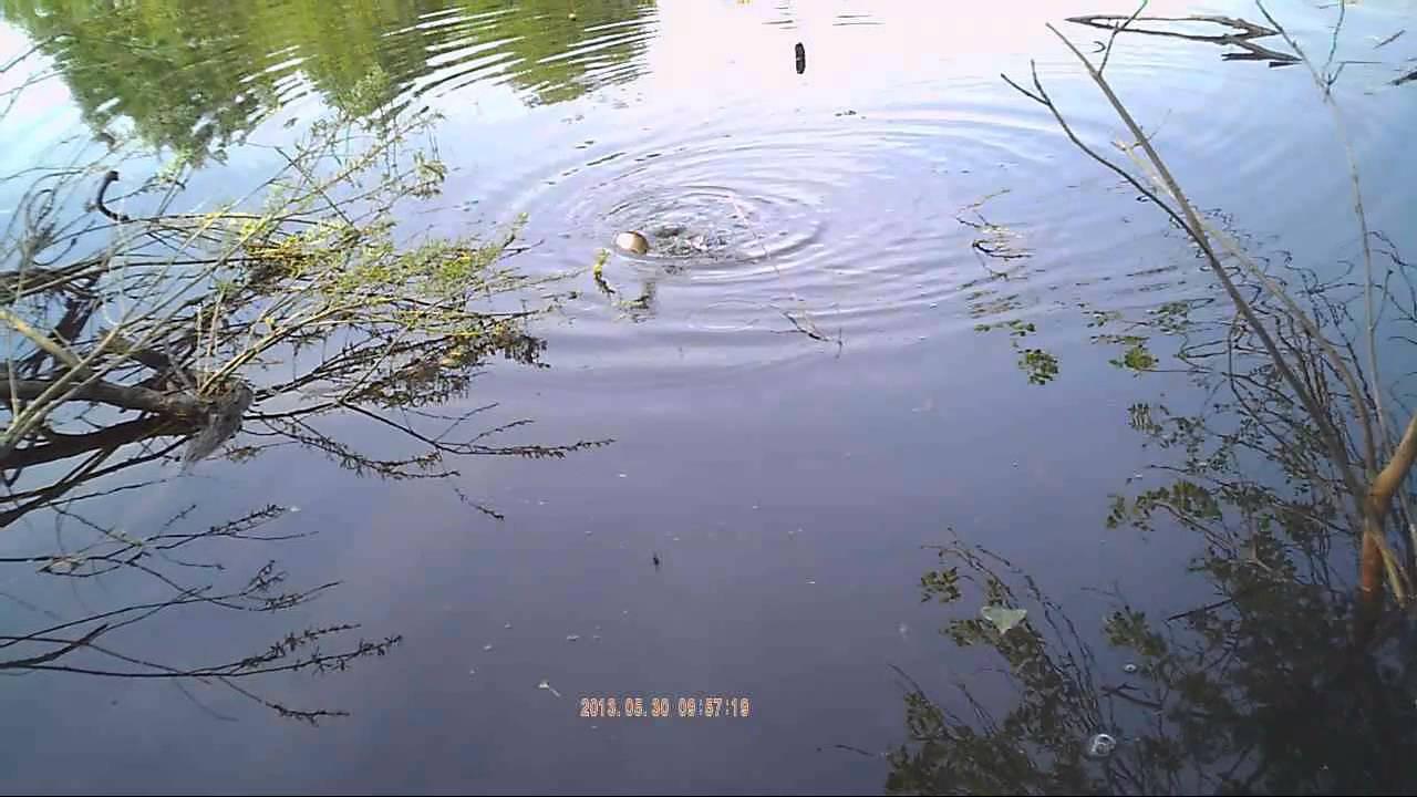 приманка для рыбы супер клев отзывы видео