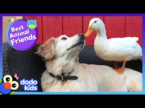 85 Minutes Of Animals Who Are Absolutely Obsessed With Each Other   Animal Videos   Dodo Kids