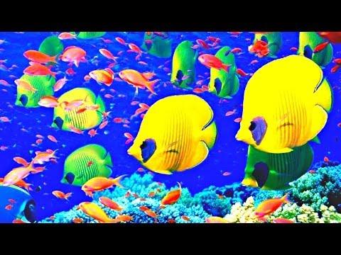 PPG Aquarium, Pittsburgh - 2014 HD