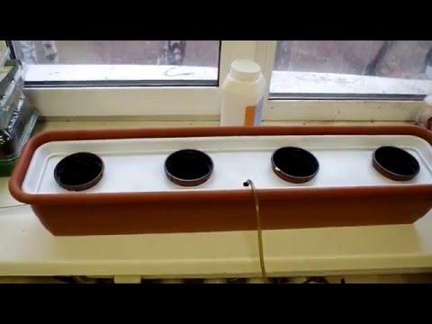 Периодическое подтопление гидропоника гидропоника выращивание конопли в домашних условиях