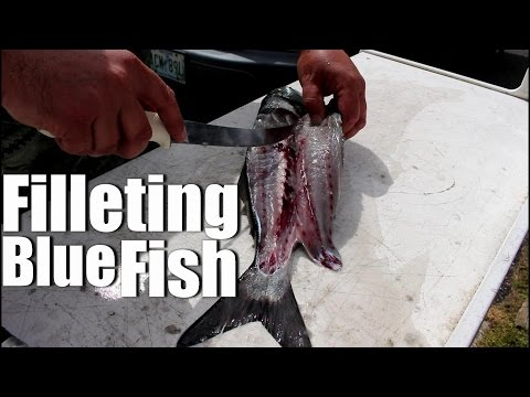 How-To: Filleting Blue Fish - Cleaning Fish Fillet