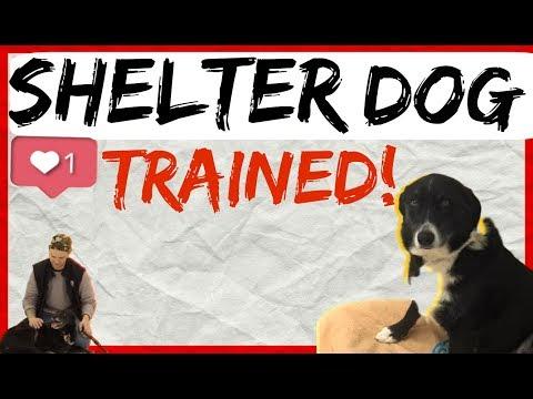 Dog Training Methods for Shelter Dogs - Dog Behavior and Body Language Explained