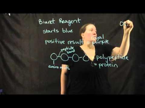 Biochemistry Lab: Biuret Reagent