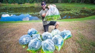 Stocking Pond With 2,500 JUMBO WILD Shiners!! (big bass feeding)