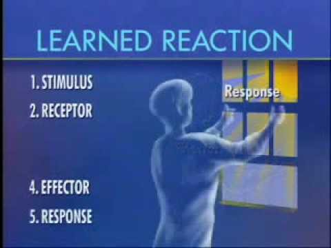 Stimulus Response - Part 1