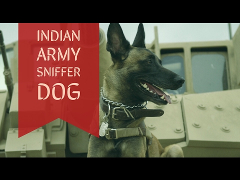 Indian Army Sniffer Dog