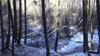 Осень в Зеленограде /часть 3/ - НОЯБРЬ