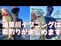 遠賀川イブニングは数釣が楽しめますよ!