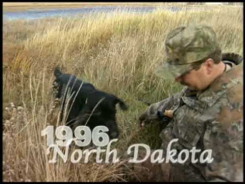 Hunting Dog Memories-Bill Miller-North American Hunting Club