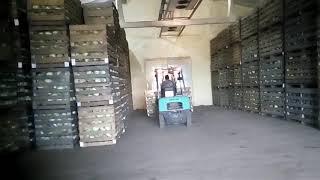 Закладка капустой овощехранилище