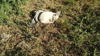 Взорвал интернет. Кот разговаривает, говорит ПОМОГИ, дела НЕ НОРМАЛЬНО, я бык! милое видео VivaVideo