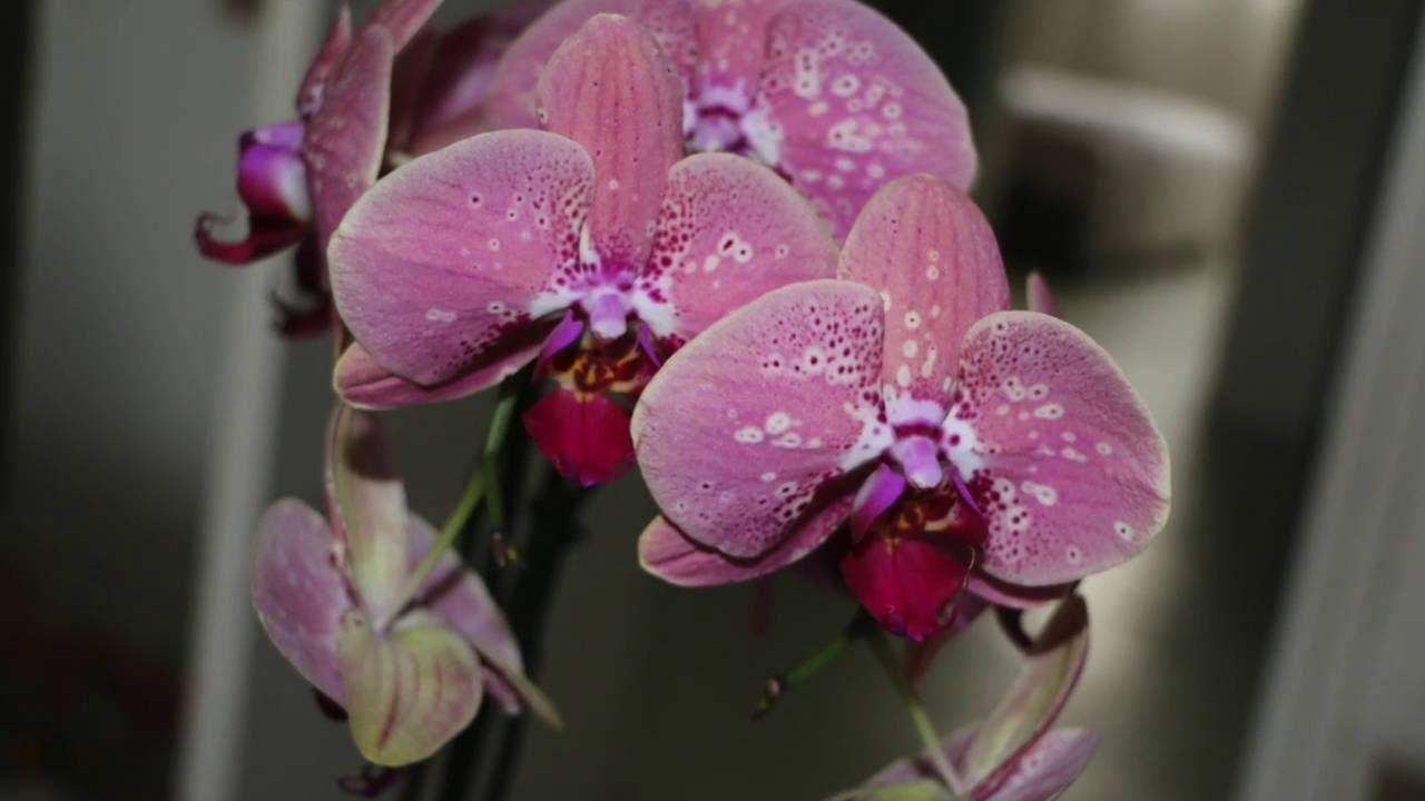 � ne jetez pas votre orchid�e ! �