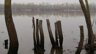 Ловлю чехонь Рыбалка на реке Десна Снасть герлянда на чехонь