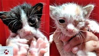 transformation-of-two-baby-kittens-found-abandoned-on-the-street