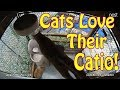 Cats Love Their Catio!