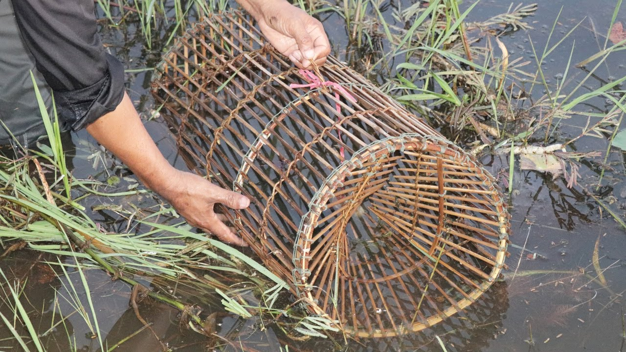 Diy fish trap how to make fish trap for fishing episode for Diy fish trap