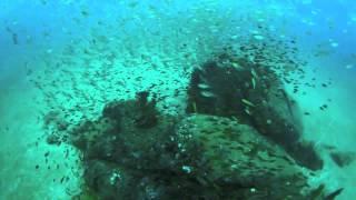 Scuba Diving in Colombo Sri Lanka