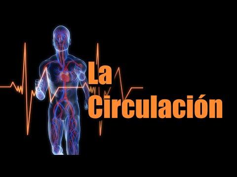 Mundo Natural - Problemas de Circulacion (CIRCULATE)
