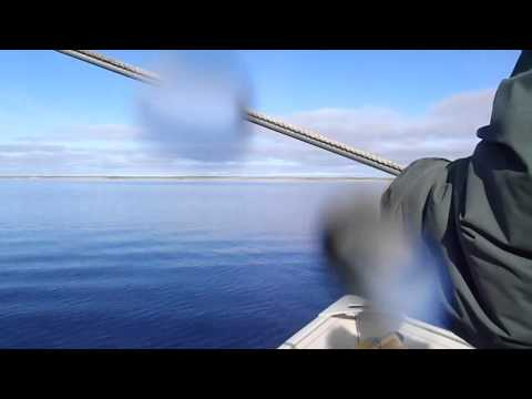 Andre Otokiak, Clarence Kaiyogana, and Cody Evalik, Narwhal Hunting in Cambridge Bay....sept 2/11