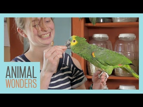 Taylor Trains an Amazon Parrot
