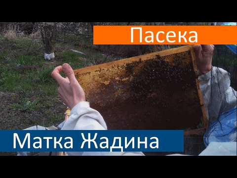 Весенняя Ревизия Пчела Карпатка Осмотр Ульевых Рамок Засева НЕТ Пчеловодство для Начинающих
