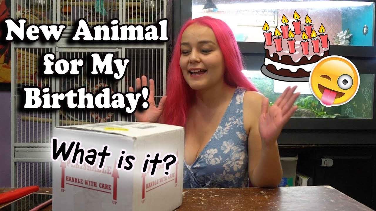 New Pet for My Birthday!!! Unboxing Live Animal   About Shipping Pets