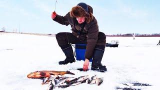 ПЕРВЫЙ ЛЕД 2020 2021 ЛОВИЛИ ОКУНЯ и ВДРУГ НАЧАЛ КЛЕВАТЬ САЗАН зимняя рыбалка на балансиры