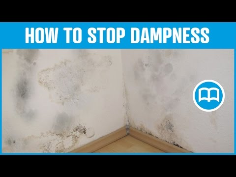 Mold in house on walls ceiling windows how to remove causes - How To Cure Damp In The Bedroom Doovi